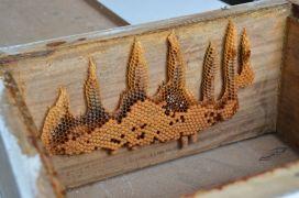"""Arılar tarafından yazılan """"Allah"""" yazısı görenleri şaşırtıyor"""