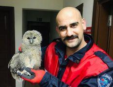 Yüksek gerilim kablolarında kalan yavru baykuş kurtarıldı