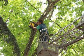 Ağaçlara ahşap kuş yuvaları yerleştirdiler