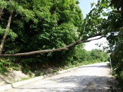 Zonguldak'ta fırtına ağaçları devirdi