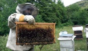 Balları çaldılar, arıları telef ettiler