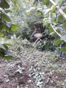 Gümeli'de traktör kazası: 1 yaralı
