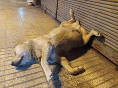 Öldü sanılan sevimli köpeğin uyuduğu anlaşıldı