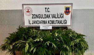 Zonguldak'ta uyuşturucu operasyonu:3 gözaltı