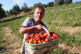 """Burada olmaz"" denilen tarlada 20 ton domates üretti"