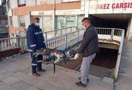Devrek'te bacağı kırılan sokak köpeği tedavi altına alımdı